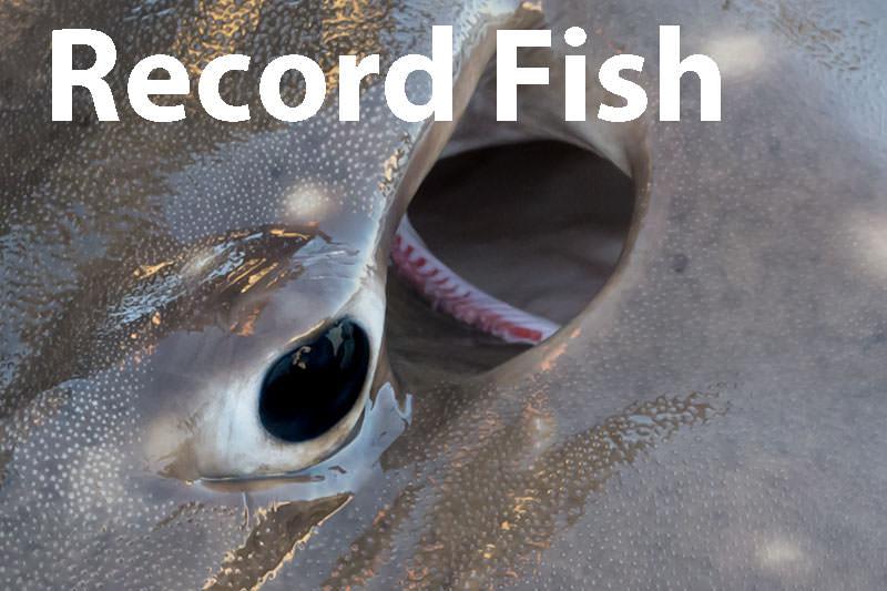 Record fish lists